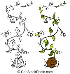 식물, 포도나무