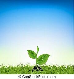 식물, 풀, 녹색, 나이 적은 편의