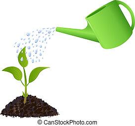 식물, 해수욕장의, 녹색, 나이 적은 편의, 양철통