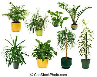 식물, 8, 다른, 세트, 옥내의