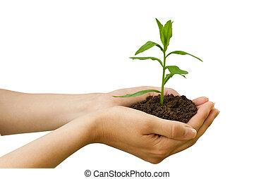 식물, agriculture., 손