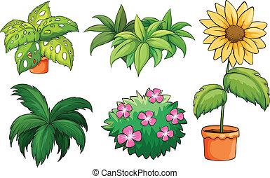 식물, flowerpots