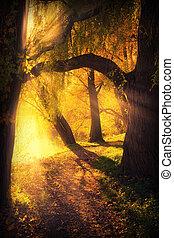 신비적인, 아치, 통로, 나무, 사이의
