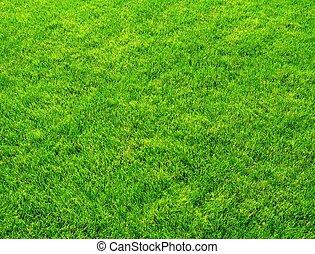 신선한, 풀, 녹색, 봄