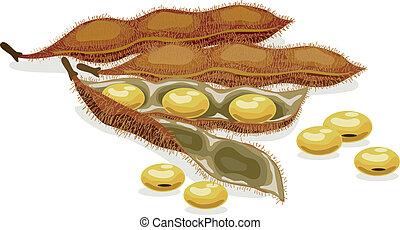 실감나는, 벡터, soybean., illustration.
