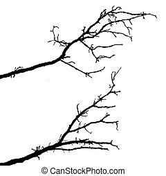 실루엣, 배경, 나무, 벡터, 가지, 백색