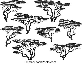 실루엣, 아카시아, 나무, african
