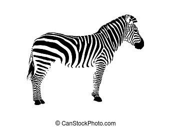 실루엣, zebra