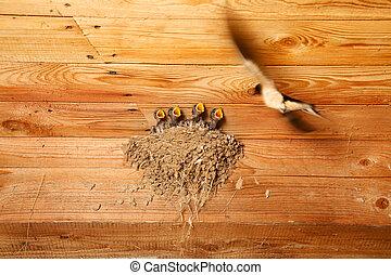 아기, 둥지, 제비, 새