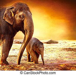 아기, 어머니, 옥외, 코끼리