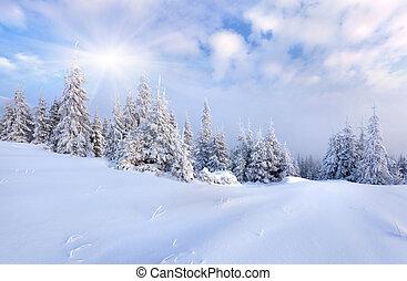 아름다운, 겨울, 나무., 덮는눈, 조경술을 써서 녹화하다