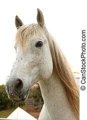 아름다운, 복합어를 이루어 ...으로 보이는 사람, 말, 카메라, 백색