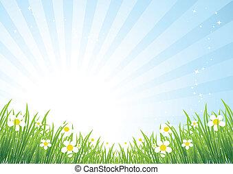 아름다운, 봄, 목초지