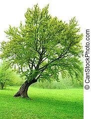 아름다운, 봄, 잎, 나무, 녹색, 신선한, 풀