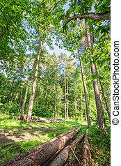 아름다운, 봄, 폴란드, 녹색의 숲