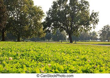 아름다운, 잔디, 공원, 나무, 녹색의 풍경