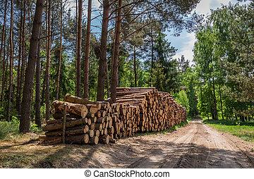 아름다운, 폴란드, 녹색의 숲, 여름
