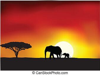 아프리카, 일몰