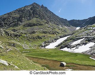 알프스 산맥, 녹색, 용해, 은 불렀다, 여름, 산, 티롤, 길게 나부끼다, 오스트리아, 눈, 하이킹, 지나치게 수식적인, 아름다운, 얼음, 봄, flowers., paradies, 활강의, 목초지, 풀, stubai, wetland