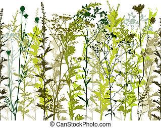 야생의, 식물, 제자리표, weeds.