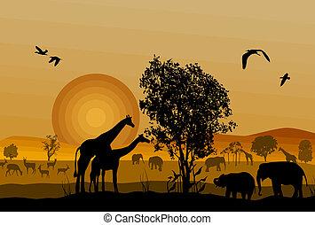 야생 생물, 실루엣, 원정 여행, 동물