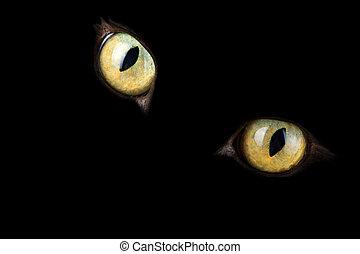어두운 눈, 백열하는 것, 고양이