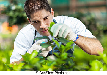 어린 남성, 일, 정원사