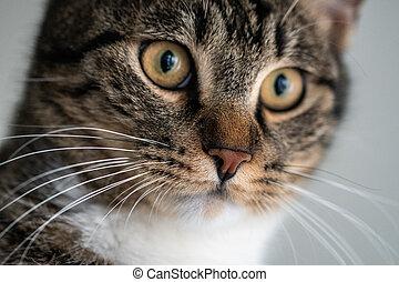 얼굴, 고양이