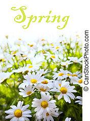 여름, 꽃, 예술, 봄, 떼어내다, 배경, 풀
