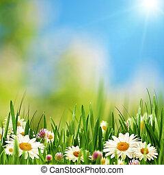 여름, 목초지, 자연의 아름다움, 떼어내다, 배경, 데이지, 꽃