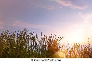 여름, 예술, 일몰, 배경, 향하여, 하늘, 떼어내다, 신선한, 풀