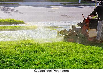 여름, 잔디, 노동자, 남자, 절단, 잔디 깎는 사람, 풀