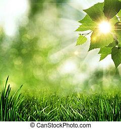 여름, 제자리표, 떼어내다, 배경, 아침, 시간 전에, 숲