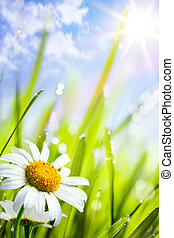 여름, 풀, 제자리표, 배경, 꽃, 데이지