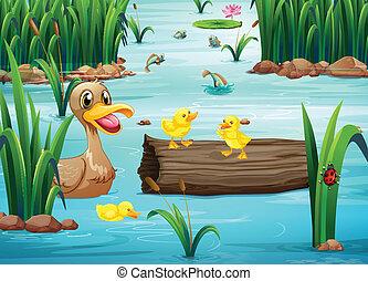 연못, 동물