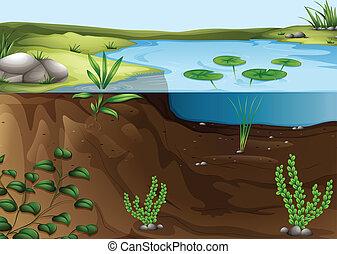 연못, 생태계