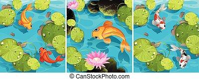 연못, 수영, 장면, fish