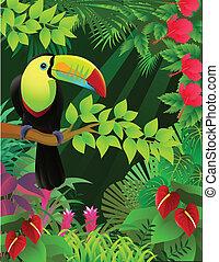 열대적인, toucan, 숲