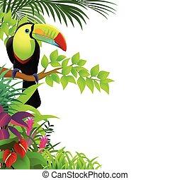 열대적인, toucan, 숲, 새