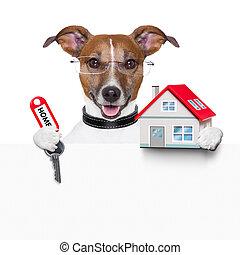 열쇠, 개, 기치, 가정