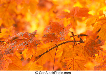 오렌지 잎, 얕은, 배경, 매우, 초점, 가을