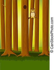 올빼미, 숲