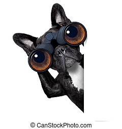 완전히, 개, 쌍안경, 복합어를 이루어 ...으로 보이는 사람