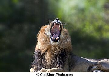 왕, 정글