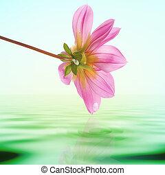 외래의, 열대 꽃