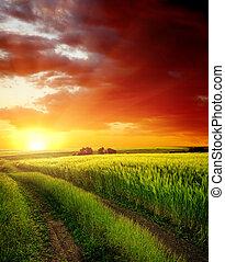 위의, 들판, 녹색, 길, 시골, 일몰, 빨강