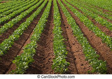 은 수확한다, 농업의, 땅, 열