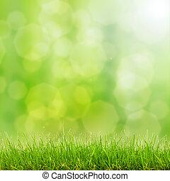 은 점화한다, bokeh, 풀, 녹색