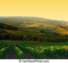 이탈리아, 익은, 제왕의, tuscany, 포도원, 포도, 해돋이