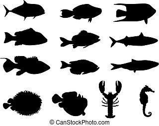 인생, 실루엣, 바다, fish